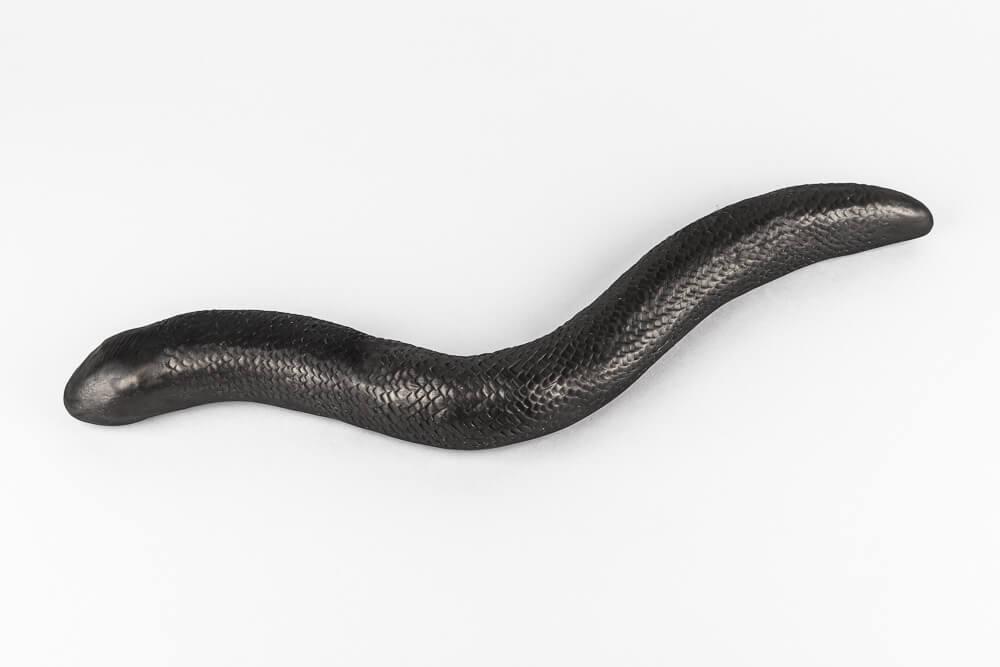 anal schlange